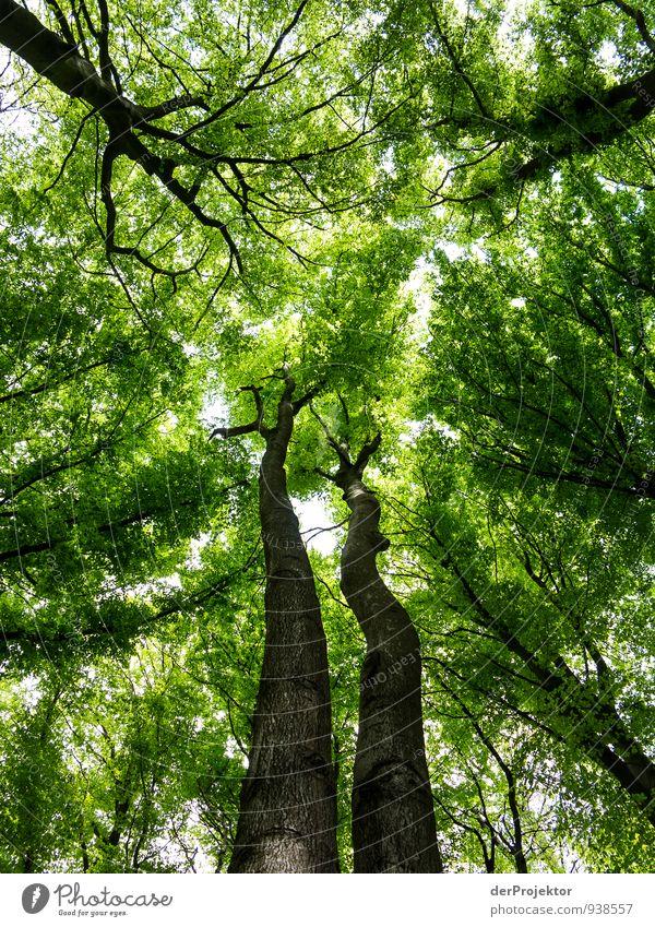 Grünbraune Riesen Himmel Natur Ferien & Urlaub & Reisen Pflanze grün Sommer Baum Landschaft Ferne Wald Umwelt Gefühle Freiheit Stimmung Freizeit & Hobby