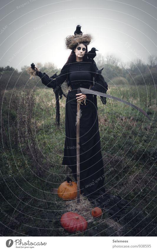 Hallo Halloween Mensch Frau Erwachsene Herbst Tod Feld Karneval gruselig Karnevalskostüm Stroh Kürbis Rabenvögel Nistkasten Sense Sensenmann