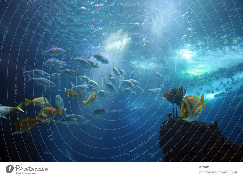 Feierabendverkehr Wasser Meer blau Fisch tauchen Aquarium Portugal Lissabon