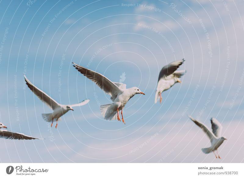 Möwen Himmel Ferien & Urlaub & Reisen blau Sommer Wolken Tier Ferne Umwelt Spielen Freiheit Vogel Lifestyle Freizeit & Hobby Wildtier Tourismus frei