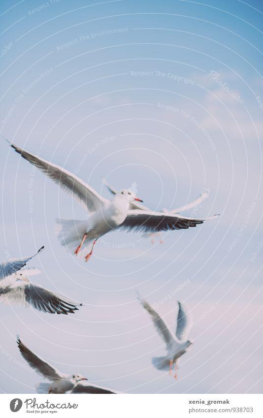 Möwe Natur Tier Himmel Wolkenloser Himmel Schönes Wetter Wildtier Vogel Taube 1 4 Tiergruppe blau türkis weiß Euphorie Tapferkeit Erfolg Willensstärke schön
