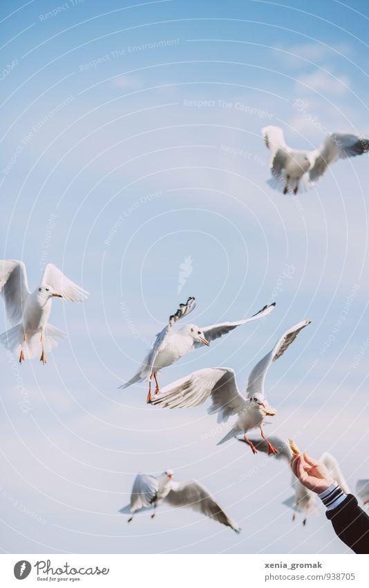 Mahlzeit Lifestyle Freizeit & Hobby Spielen Umwelt Natur Tier Himmel Wolken Wetter Vogel Flügel Krallen 4 Tiergruppe füttern blau weiß Tierliebe ruhig