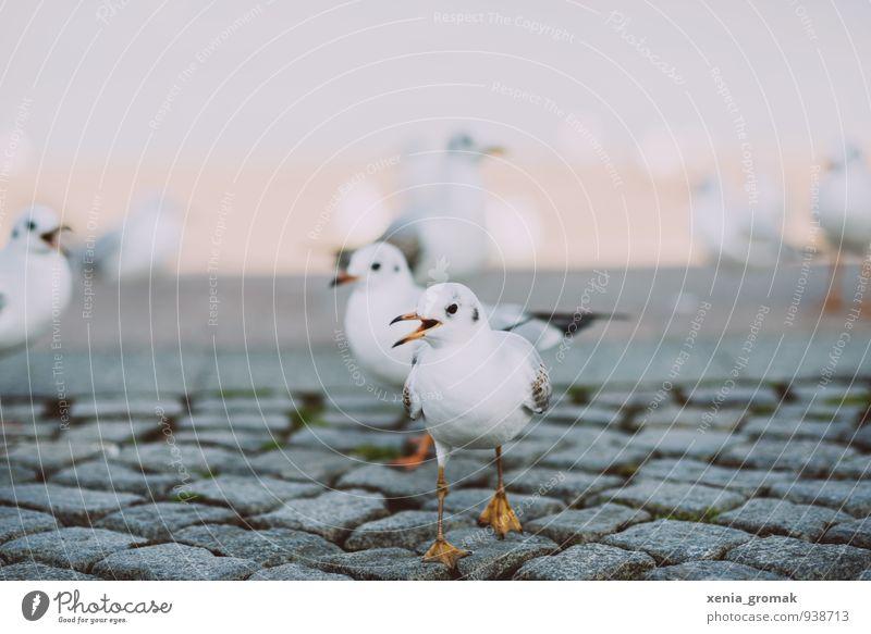 Vogel Natur weiß Freude Tier Umwelt Bewegung Freiheit Freundschaft Wetter Freizeit & Hobby Idylle Klima ästhetisch Tiergruppe Möwe