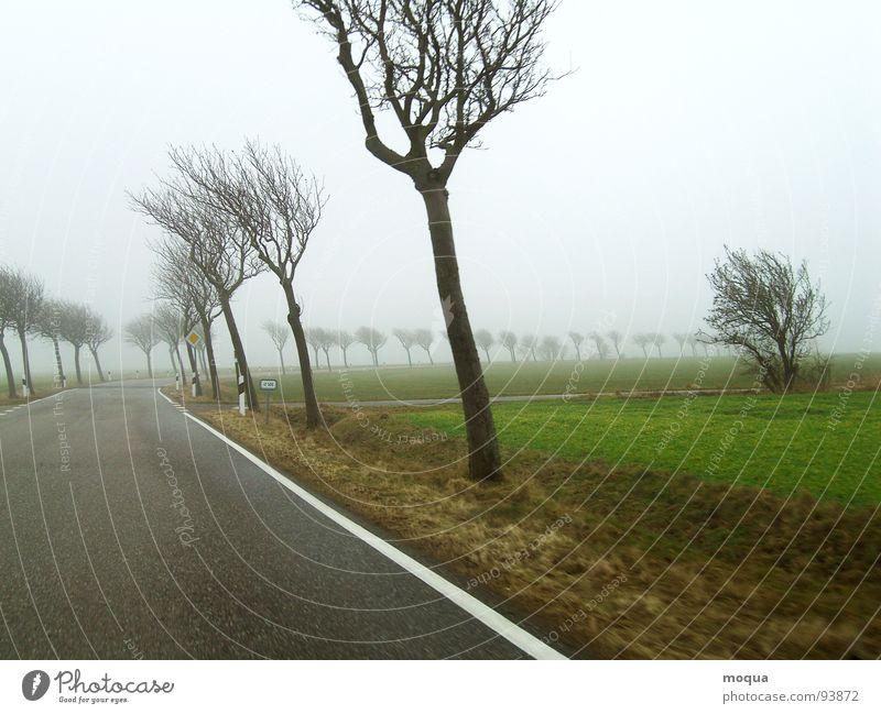 windschief Baum grün Winter Einsamkeit Straße kalt Herbst grau Regen braun Feld Nebel Wind nass Aussicht