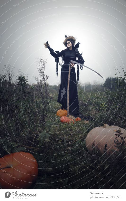 Kürbisernte Mensch Frau Natur Landschaft Erwachsene Umwelt Herbst feminin Vogel Horizont Feld Wolkenloser Himmel Karneval gruselig Halloween Krähe