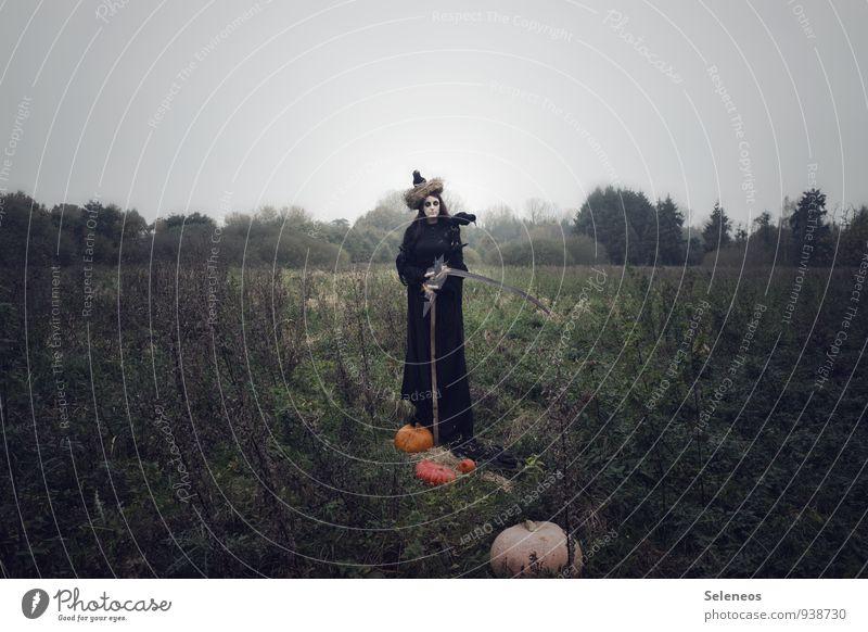 letzte Ernte Mensch Frau Natur Landschaft Umwelt Erwachsene Herbst Wiese feminin Vogel Horizont Feld Sträucher Wolkenloser Himmel gruselig Halloween