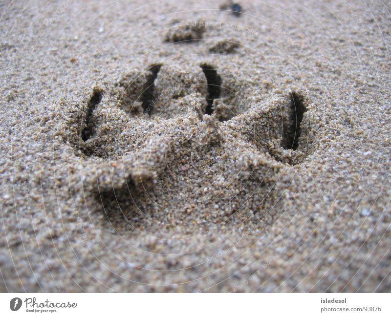 Spuren im Sand Freude Strand Tier Stimmung Kraft Küste laufen Kraft weich 100 Meter Lauf