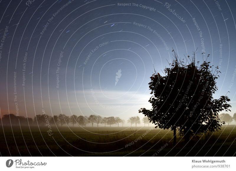 Halloween-Vorabend Umwelt Natur Landschaft Himmel Wolkenloser Himmel Stern Horizont Mond Herbst Klima Schönes Wetter Baum Gras Feld dunkel blau grau schwarz