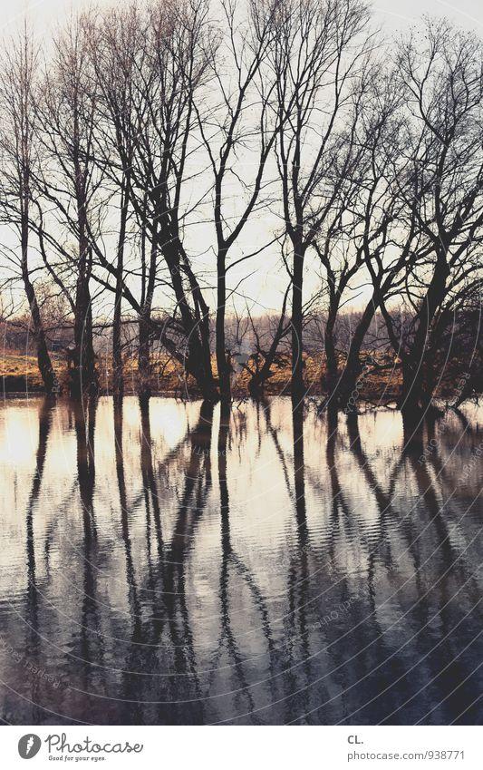 am see Natur Wasser Baum Landschaft ruhig Umwelt Küste See Wetter Klima Schönes Wetter Urelemente Seeufer