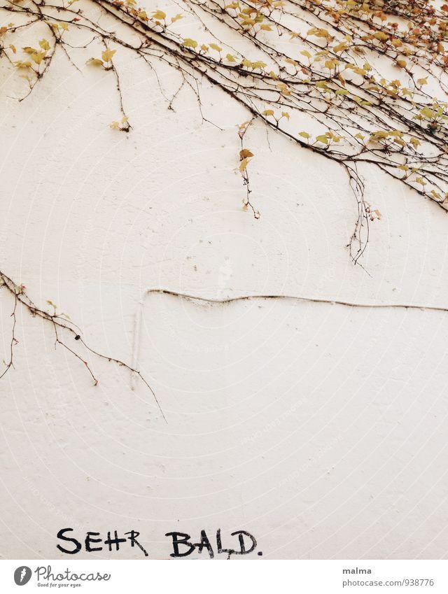 sehr bald. Einsamkeit Haus Wand Gebäude Mauer Zeit Abenteuer Hoffnung Ende Information Partnerschaft Optimismus Enttäuschung Endzeitstimmung Efeu Mitteilung