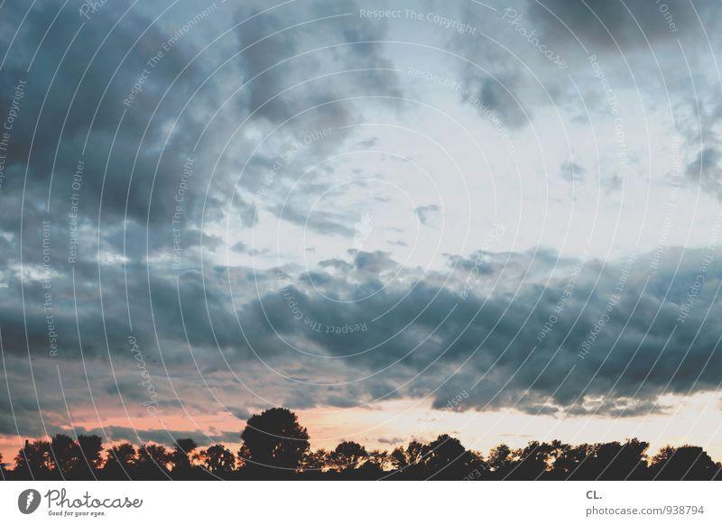 himmel Umwelt Natur Landschaft Urelemente Himmel Wolken Sonnenaufgang Sonnenuntergang Wetter Schönes Wetter Baum Farbfoto Außenaufnahme Menschenleer