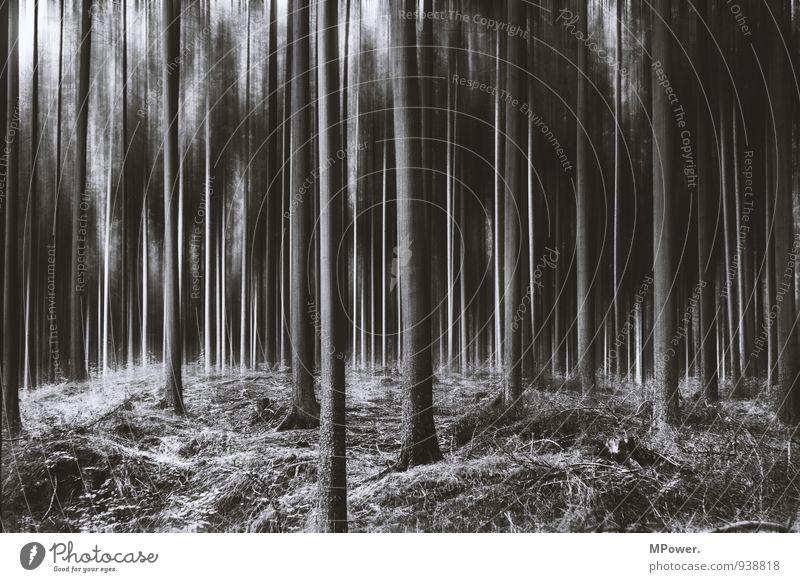 spooky trees II Pflanze Baum Wald Urwald trashig verrückt schwarz träumen Angst gruselig Bewegung chaotisch Märchenwald Schwache Tiefenschärfe Unschärfe