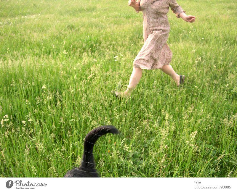 run springen Hund Wiese Frühling Freude dog fun flowers grass tail
