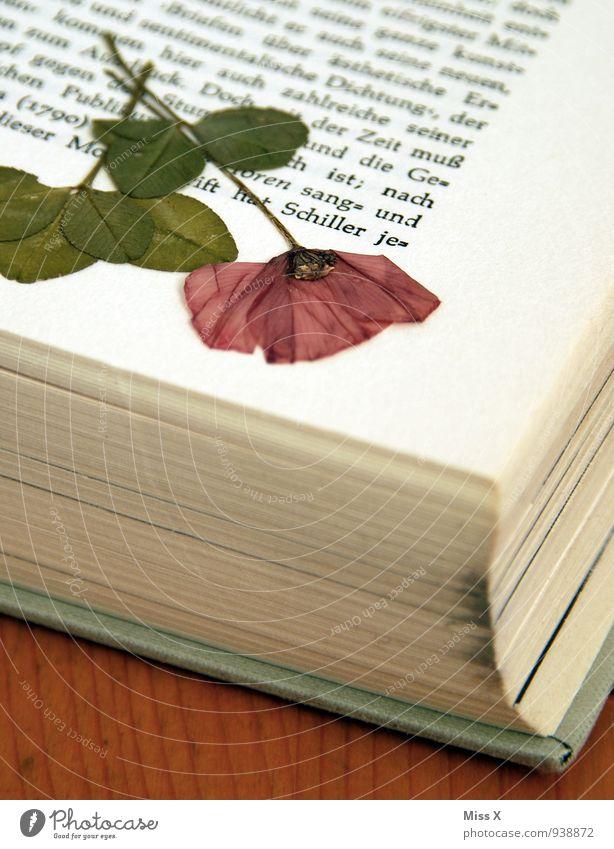 Gepresst für die Ewigkeit Freizeit & Hobby lesen Basteln Blume Blüte Souvenir Sammlung dehydrieren trocken Stimmung Erinnerung gepresst konserviert Buchseite
