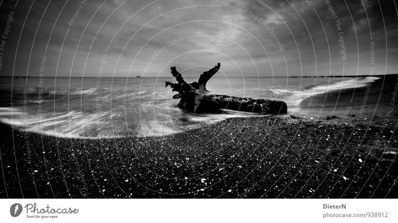 Treibholz Natur Landschaft Sand Wasser Himmel Wolken Wetter schlechtes Wetter Wind Küste Ostsee Meer grau schwarz weiß Baumstamm Wellen Strand Horizont