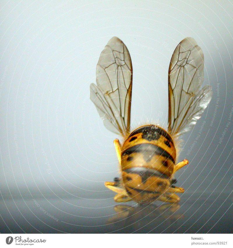 Ich tanz dir was ins Ohr Tanzen Kommunizieren Hinterteil Flügel Insekt Biene Flughafen Flugzeuglandung rückwärts gestreift Abheben Tier Wespen Schneidersitz