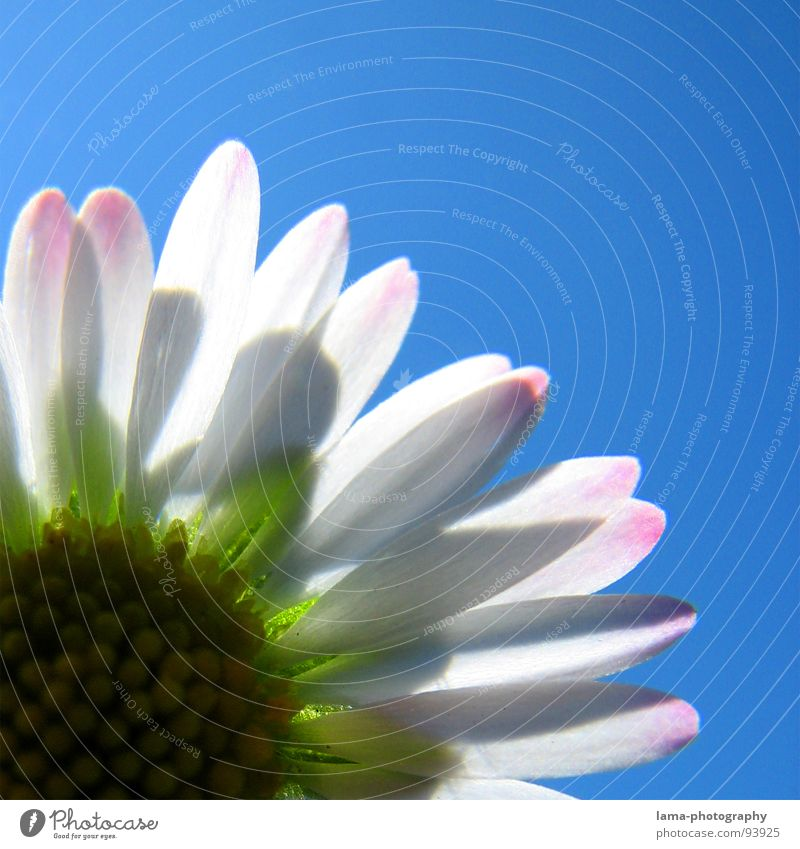 Mini - Jubiläum Himmel Natur blau weiß Sommer Pflanze Blume Freude Erholung Wiese Gefühle Frühling Glück Blüte Garten Feste & Feiern