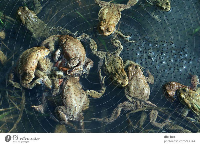 Spaß macht's Frosch Teich wirtschaftlich Fortpflanzung Tier Kröte