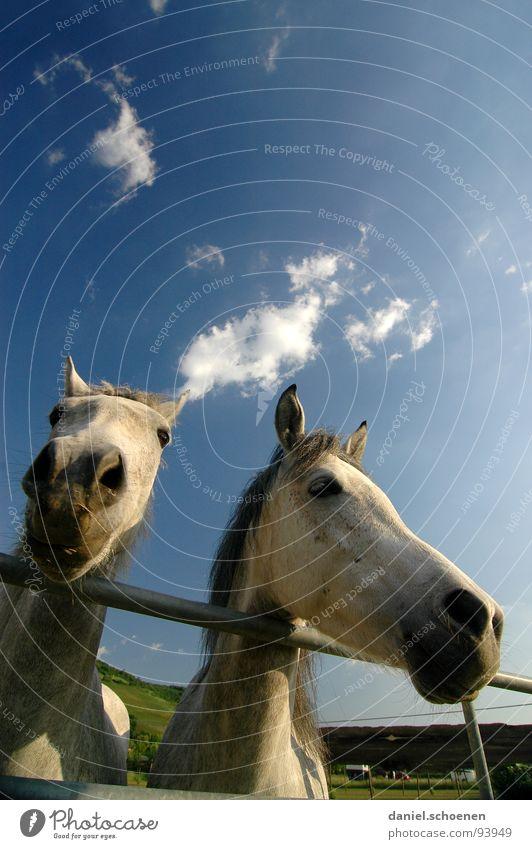 ...und sonst ?? Himmel blau grün schön Ferien & Urlaub & Reisen Sommer Tier Wolken Auge Umwelt Wiese Gras Wetter Tierpaar Nase Perspektive