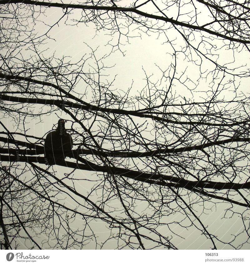 F. REISEIN... Vogel Taube Geäst Baum Silhouette Frieden Freude frei fliegen Natur Freiheit frei sein ... Wandel & Veränderung Irritation