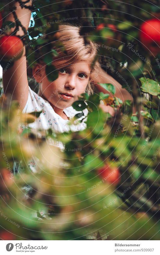 . Frucht Apfel Bioprodukte Mensch feminin Kind Mädchen Familie & Verwandtschaft Kindheit Gesicht 1 3-8 Jahre 8-13 Jahre Natur Pflanze Baum Blatt Apfelbaum