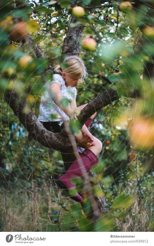 der Apfel fällt nicht weit vom Stamm Mensch Kind Natur Pflanze grün Sommer Baum Erholung ruhig Mädchen Umwelt gelb Herbst feminin Spielen Gesundheit