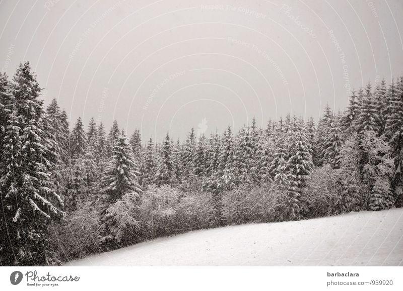Schneeflocken Himmel Natur Landschaft ruhig Winter Wald kalt Umwelt Stimmung Schneefall Luft Erde Klima Wandel & Veränderung Sinnesorgane