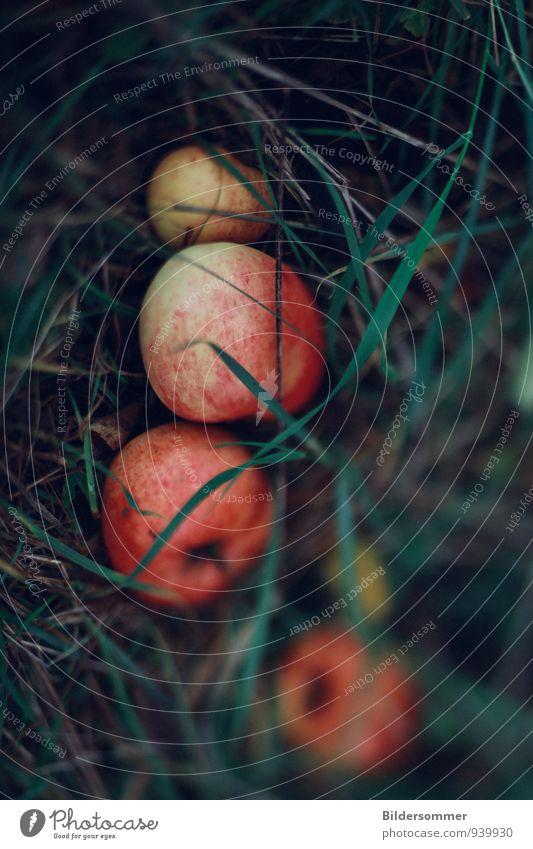 soon-to-be apple pie :-) Natur blau schön grün rot gelb Herbst Gras Essen Gesundheit Garten Lebensmittel Gesundheitswesen liegen Frucht frisch