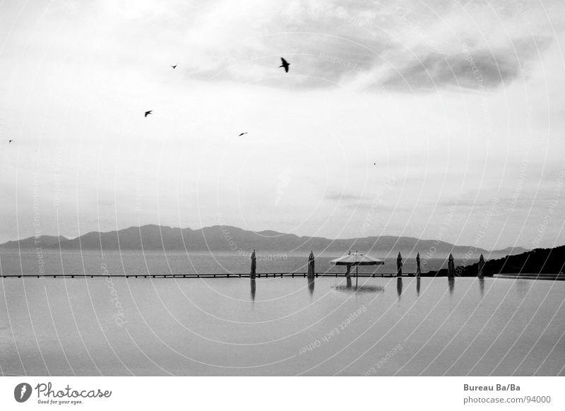 *träum* Wasser Himmel weiß Meer Ferien & Urlaub & Reisen schwarz Wolken dunkel Vogel Insel Schwimmbad Sonnenschirm