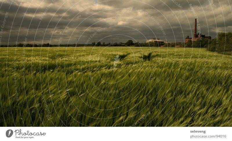 WindWolkenWeizen Natur Bewegung Regen Feld Wetter Gewitter