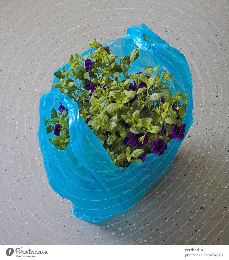 Blumentopf (transportbereit) grün Pflanze Blüte Häusliches Leben Güterverkehr & Logistik Blühend Feiertag Verpackung Grünpflanze Jubiläum verpackt passend