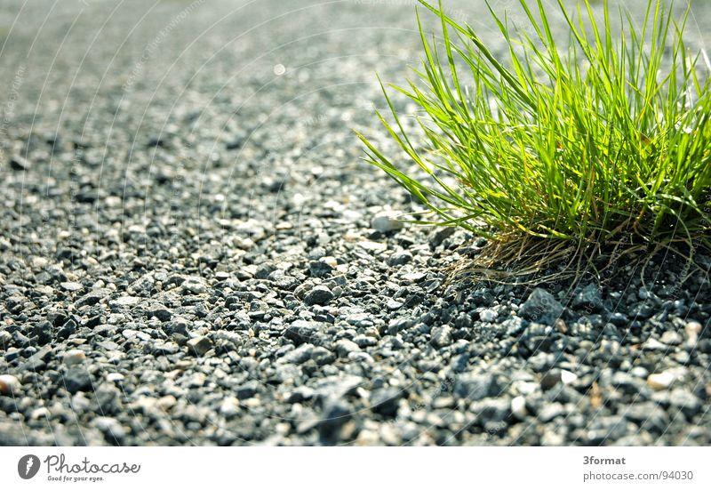 pionier grün Pflanze Einsamkeit Straße Schnee Wiese Gras grau Wege & Pfade Kraft Energiewirtschaft Wachstum Rasen Asphalt Fußweg
