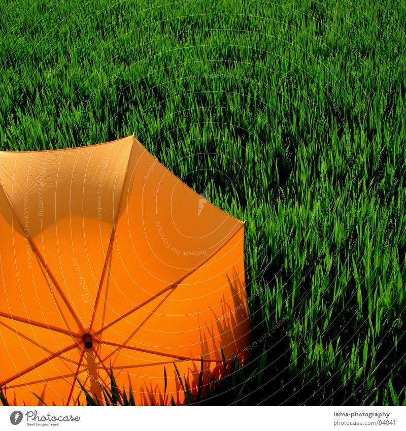 Schattenspiel Cloppenburg Regenschirm Sonnenschirm Unwetter Wolken Gras Halm Wiese Sommer Feld grün Frühling ruhig Einsamkeit Erholung Sonnenbad vergessen