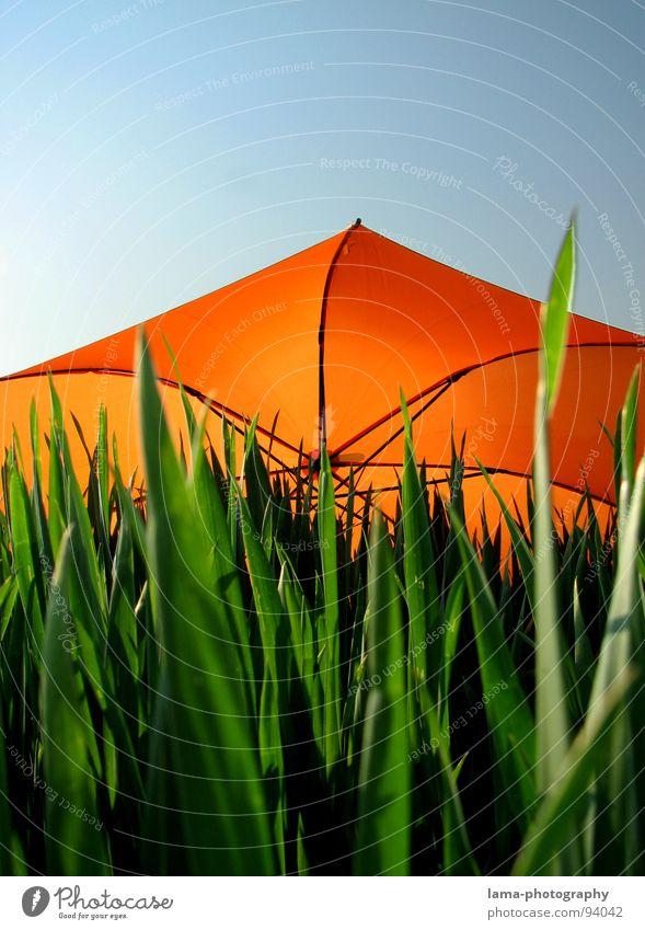 Dreifarbigkeit Cloppenburg Regenschirm Sonnenschirm Unwetter Wolken Gras Halm Wiese Sommer Feld grün Frühling Blumenwiese Umwelt sommerlich Pflanze
