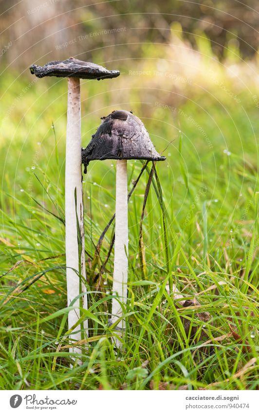 Pärchen mit Hut Natur Pflanze grün weiß schwarz Umwelt Herbst Wiese Gras natürlich Zusammensein Schönes Wetter Vergänglichkeit Wandel & Veränderung dünn Stengel