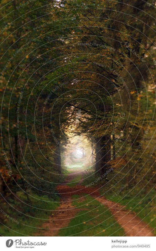left to my own devices Umwelt Natur Erde Wassertropfen Herbst Klima Nebel Pflanze Baum Gras Blatt Wald nachhaltig Wege & Pfade Zukunft Fußweg Tunnelblick