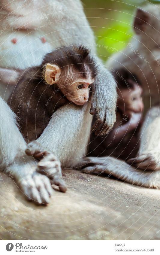 Bande Tier Wildtier Tiergesicht Zoo Affen Tierjunges Tierfamilie klein weich niedlich Farbfoto Außenaufnahme Tag Schwache Tiefenschärfe Tierporträt