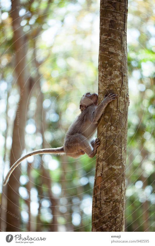 Kletteraffe Tier Wildtier Zoo Affen 1 Tierjunges natürlich Neugier Klettern Farbfoto Außenaufnahme Menschenleer Tag Schwache Tiefenschärfe Tierporträt