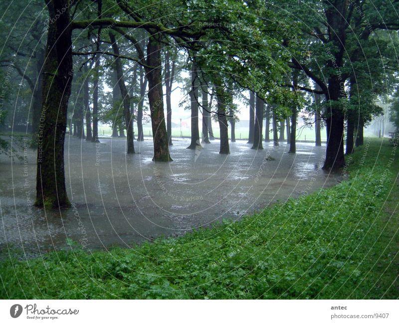 Land unter Hochwasser Wald Baum Wiese Sommer Überschwemmung