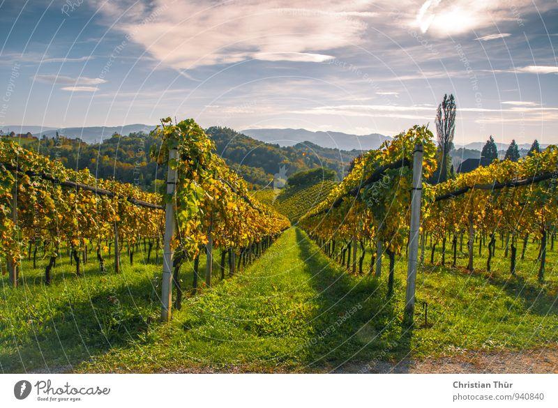 Spätsommerimpression Bioprodukte Wein Gesundheit Gesundheitswesen Wellness Leben harmonisch Wohlgefühl Zufriedenheit Sinnesorgane Erholung ruhig Tourismus