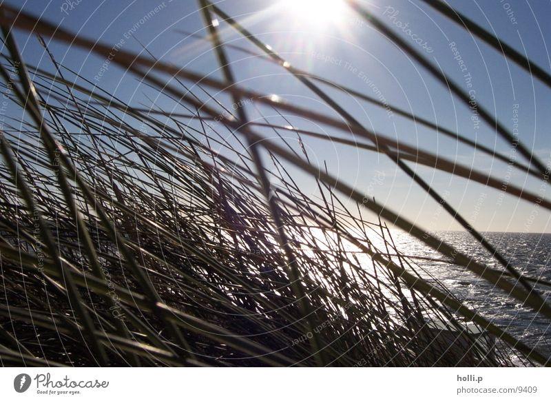 meer gras Meer Strand Gras Sand Nordsee