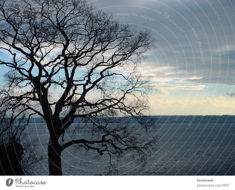 Baum und Wolken Himmel Sonne See