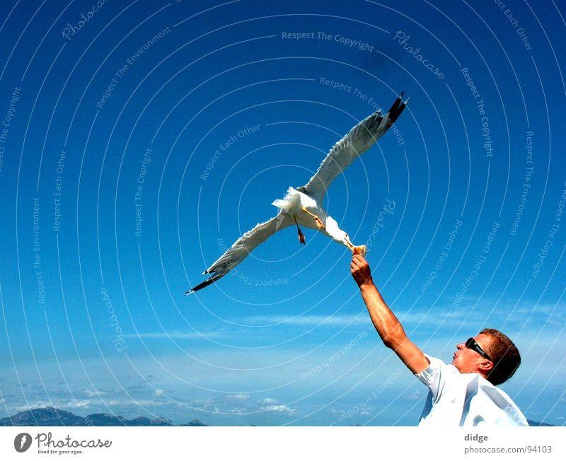 Kontakt Himmel Vogel Frieden Möwe verbinden Treffer Momentaufnahme