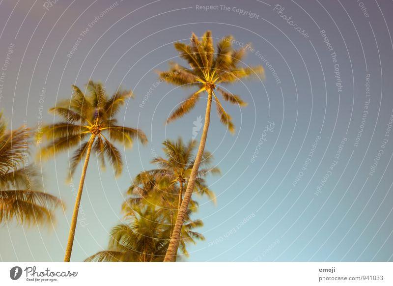 Nachtaufnahme Umwelt Natur Pflanze Himmel Wolkenloser Himmel Sommer Schönes Wetter Wind Baum Grünpflanze Wärme blau Palme Farbfoto mehrfarbig Außenaufnahme