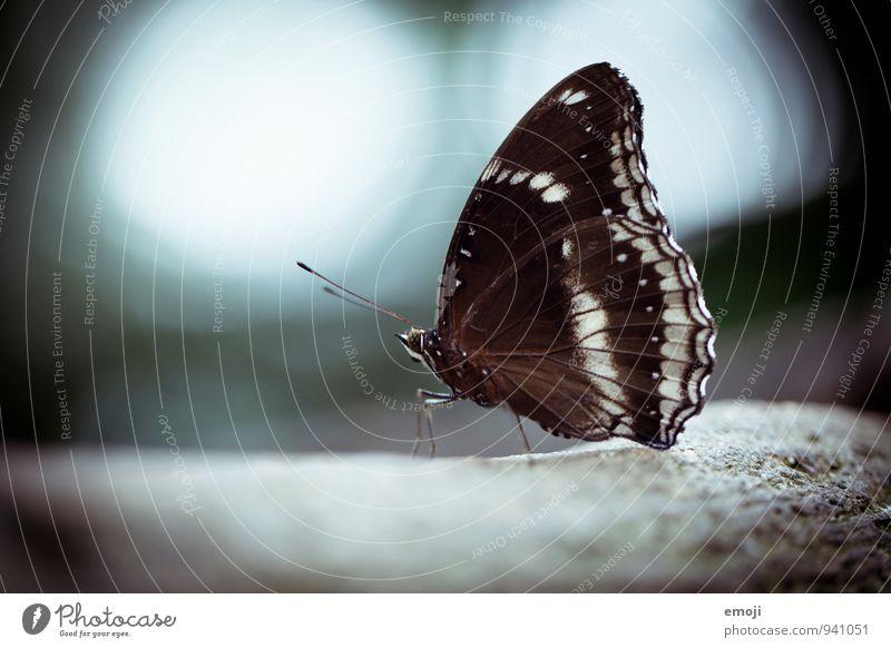 Schmetterling Tier Wildtier Flügel Zoo 1 schön blau Farbfoto Außenaufnahme Nahaufnahme Makroaufnahme Menschenleer Tag Schwache Tiefenschärfe