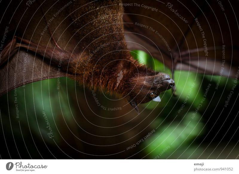 na ich! Natur Tier dunkel Umwelt Wildtier gruselig Zoo Fledermäuse