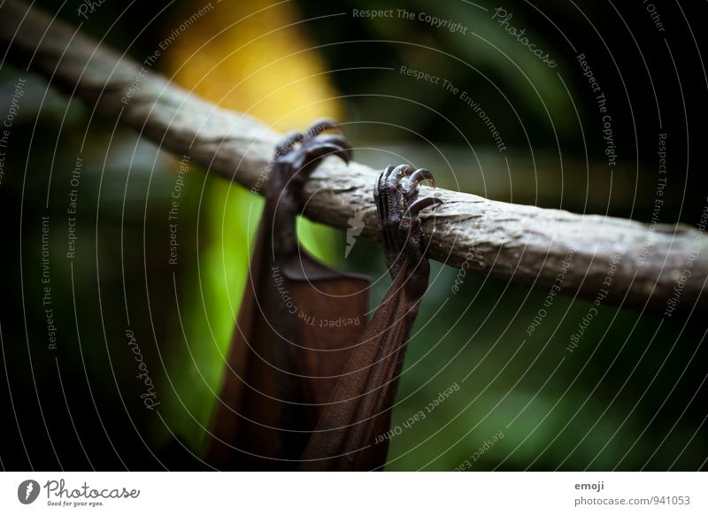 was hängt denn da? Natur Tier dunkel Umwelt Wildtier gruselig Zoo Krallen Fledermäuse