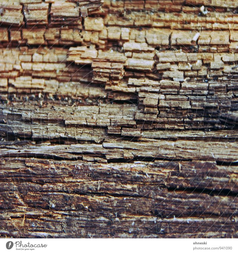 Holz alt Linie Vergänglichkeit Pfosten Holzpfahl morsch