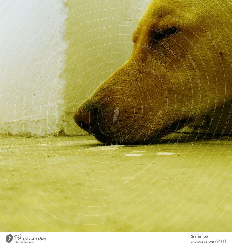 Abgelegt Erschöpfung schlafen kaputt Schnauze Zufriedenheit grün Säugetier Erholung Müdigkeit matt Hundewetter Nase