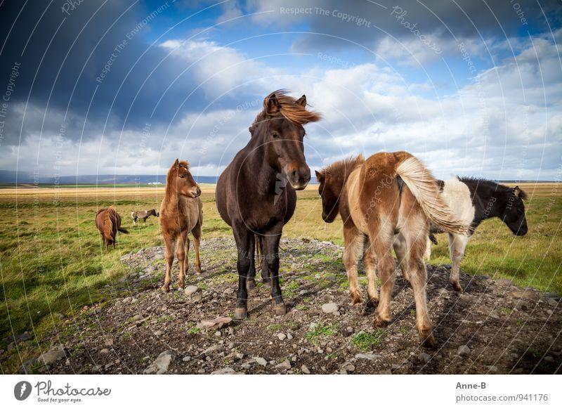 """Wind in den Mähnen Reitsport Landwirtschaft Forstwirtschaft Landschaft Tier Himmel Nutztier Pferd Herde stehen frei natürlich Tapferkeit Kraft """"windfarbent"""